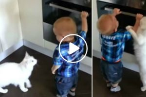 Cat Stops Baby From Opening Oven 10