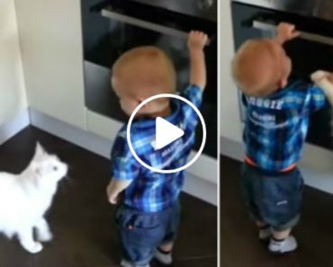 Cat Stops Baby From Opening Oven 7