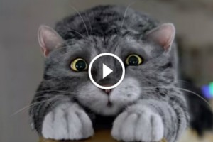 Cat Wins The People Hearts In UK Christmas 10