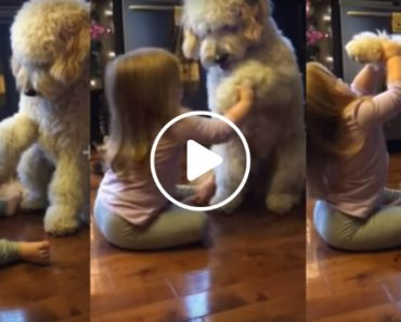 Her Dad Caught Her Training The Family Dog. Seeing Them Together Is Just Too Adorable 5