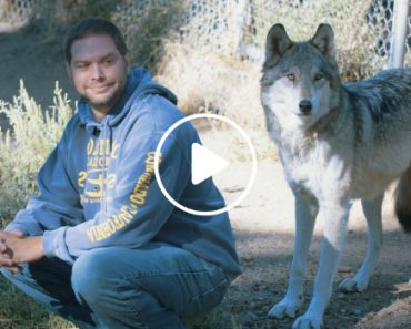 Veterans Coping With PTSD Are Healing With The Help Of Rescued Wolves 4