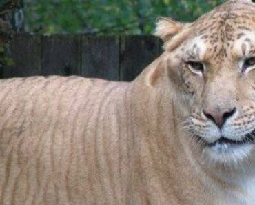 Some Crazy Animal Hybrids That Actually Exist 1