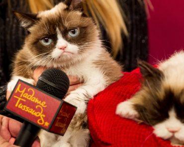 Grumpy Cat Meets Animatronic Double, But Still Isn't Happy 7