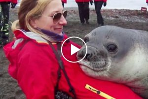 Snuggly Baby Seal Just Wants a Little Love When Mom's Not Around 11