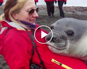 Snuggly Baby Seal Just Wants a Little Love When Mom's Not Around 1