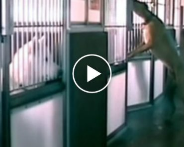 This Shelter Had The Strangest Things Happen At Night So They Set Up A Camera. You Have To See What They Discovered 2