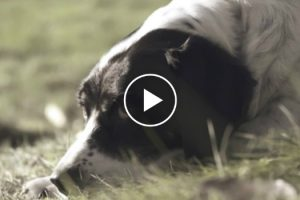 """A Dog's Last Will And Testament"" - Touching Video With The Most Beautiful Message 10"