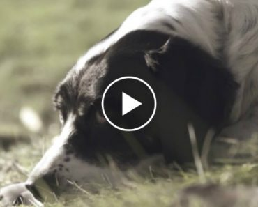 """A Dog's Last Will And Testament"" - Touching Video With The Most Beautiful Message 3"