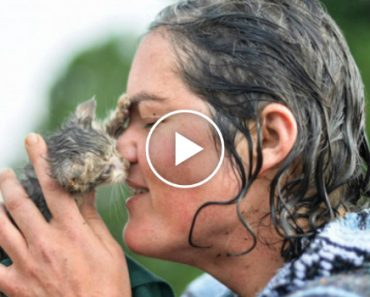 You Won't Believe What This Woman Does To Save a Kitten's Life 5