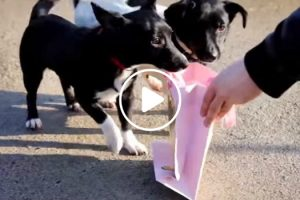 Watch This Heartwarming Video Of Homeless Dogs Opening Their Christmas Presents 12