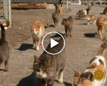 Cats Take Over Japanese Island 6