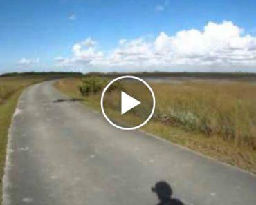 Log On Bike Path Is Not What It Seems 4