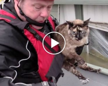 Cat Astonishes Rescuers When They Discover The Unthinkable… Floating Where They'd Least Expect 7