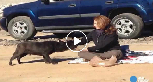 Dog Found In The Unlikeliest Place Reunites With Family After Being Missing For 2 Years 12