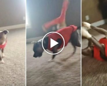 "Dog Sees Girl Doing Cartwheel And Decides ""What The Heck, I'll Do One Too"" 7"
