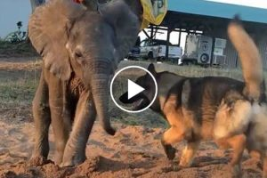 Rescued Baby Ellie Beats The Odds With The Help Of His Canine Companion 10