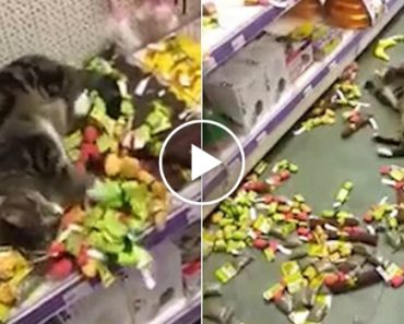 Lost Cat Rolling Around In Catnip Toys In Pet Store 7