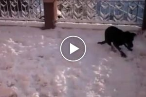 This Dog's Reaction To Seeing Snow For The First Time Will Put A Big Smile On Your Face 10