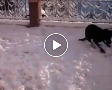 This Dog's Reaction To Seeing Snow For The First Time Will Put A Big Smile On Your Face 8