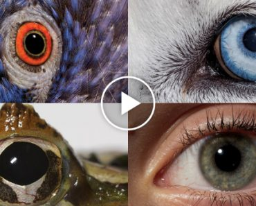 How Animals And People See The World Differently 9