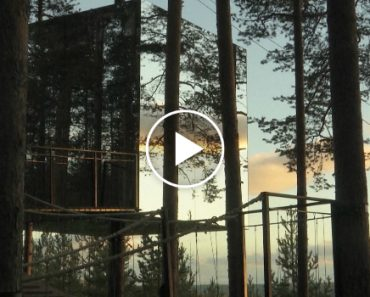 Sleep In The World's Most Futuristic-Looking Treehouse Hotel In Sweden 4