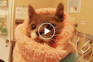 GoPro Video Of a Day Inside a Kitten Nursery 12