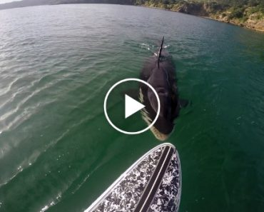 When You're Paddle Boarding, The Last Thing You Want Is This Unexpected Visitor 8