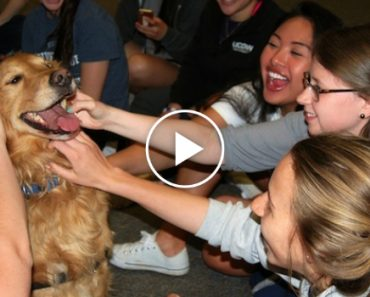 The Sweet, Furry Approach Some Colleges Are Taking To Ease Students Stress Is Brilliant 3