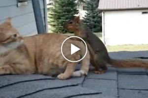 Squirrel Pops By To Visit His Best Friend, The Cat 11
