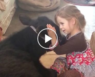 """Oops, I let the cow in"": Watch Adorable Little Girl Explain Unexpected House Guest To Her Mum 2"