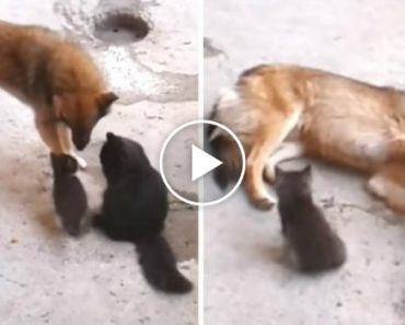 Mother Cat Brings Her Kittens To Meet An Old Friend, With An Incredible Twist 4