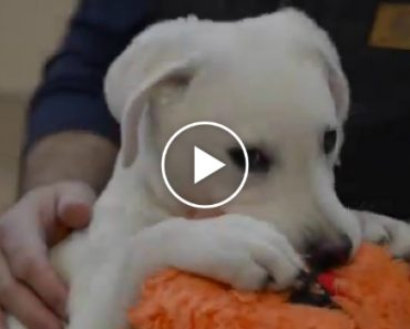 Puppy Can't Swallow Food On His Own, His Rescuers Made Him An Awesome Chair To Help 4