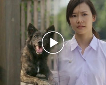 This Ad Featuring a Girl And Her Dog Is Making The Internet Weep 5