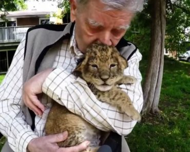 This Animal-Loving War Vet Had Never Been To a Zoo, So They Gave Him a Special Gift 3
