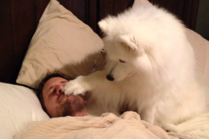 Dog Tries To Wake Up Her Dad In The Most Gentle Way 11