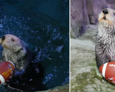 Are You Ready For Some Otterball? 6
