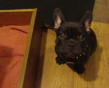 This French Bulldog Doesn't Want To Go To Bed. His Argument Is Great! 1
