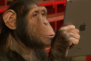 What Happens When Monkeys React To iPad Magic 9