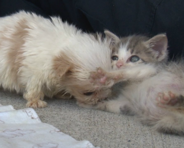 A Rescue Puppy Can't Be Separate From His Best Friend, And It's The Cutest Thing Ever 3