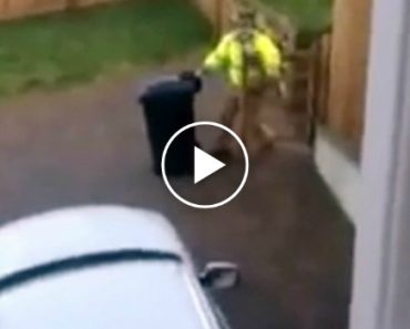 On a Cold And Icy Morning, One Father Had To Hilariously Battle With a Garbage Bin 5