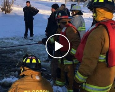 Firefighters Rush To Rescue Two Horses Stuck Up To Their Necks In Freezing Water 7