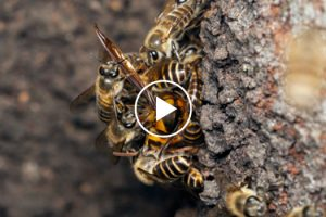 When Bees Return To The Hive Drunk, They Get In Bigger Trouble Than Humans Do 12