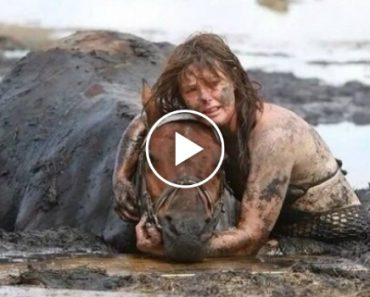 She Tearfully Hugs Her Horse For 3 Hours. When All Hope Is Lost, The Incredible Happens! 6
