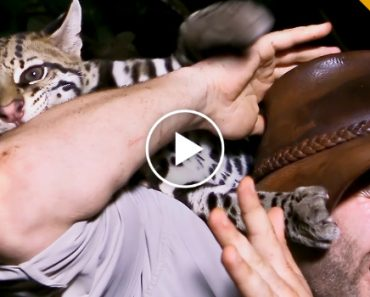 Wildlife Videographer Documents His Encounter With An Ocelot 6