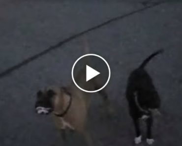 Police Officer Praised For Nonlethal Response To 'Vicious Dogs' Report 6