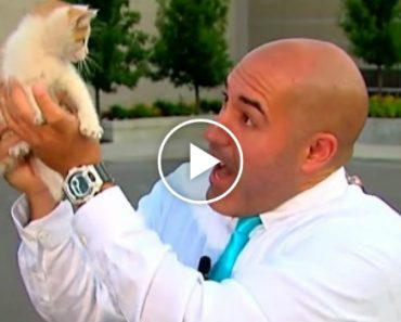 Stray Kitten Interrupts Live Newscast Meowing For Help 1