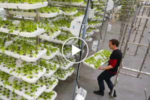 This Farm of the Future Uses No Soil and 95% Less Water 11
