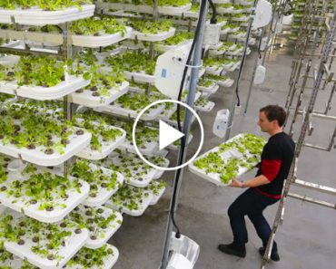 This Farm of the Future Uses No Soil and 95% Less Water 9