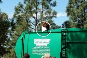 Bear Rides In Style On Top Of A Garbage Truck 10