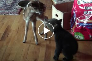 Bear Cub and Fawn Meet for the First Time 12